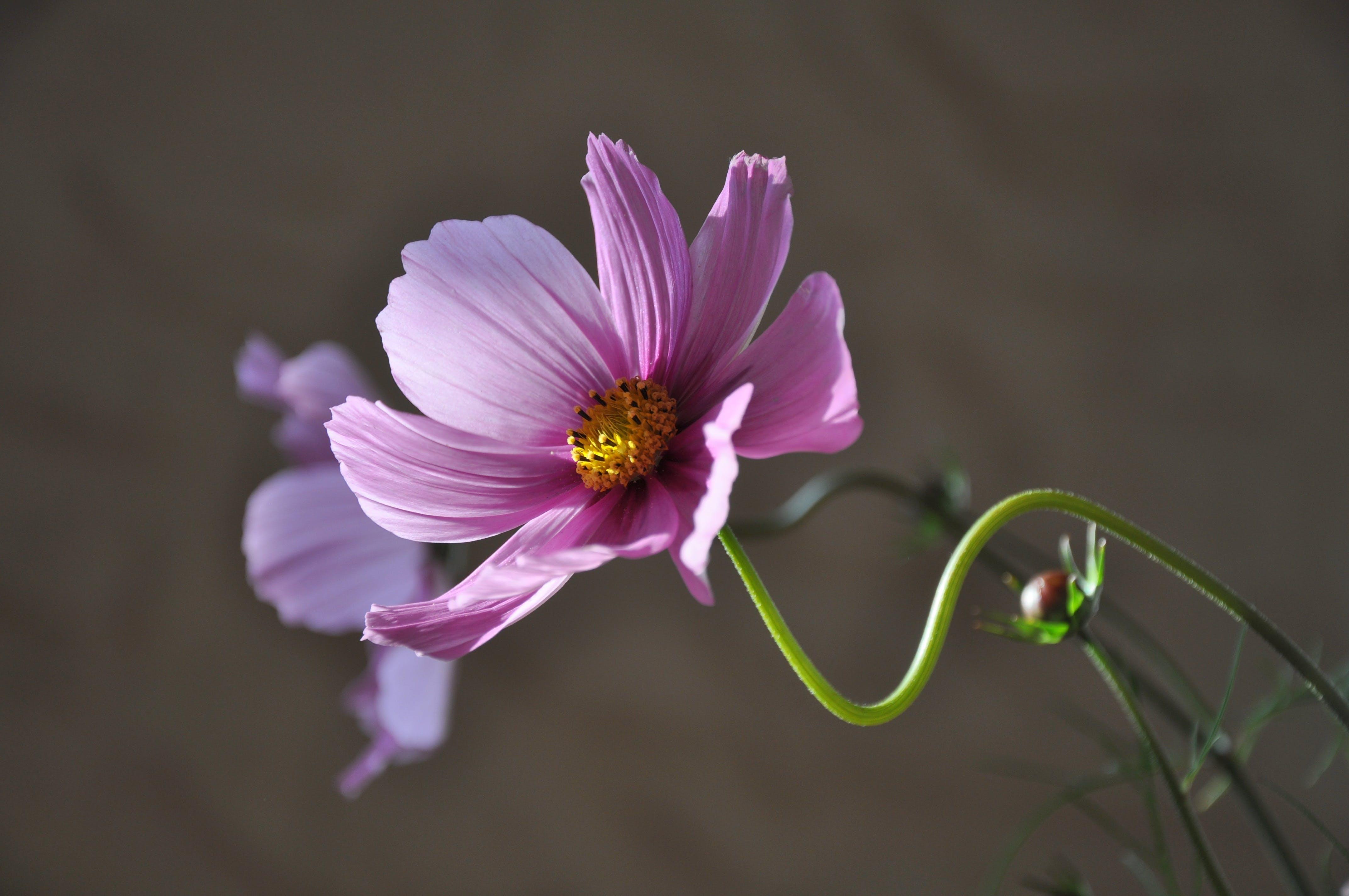 fialová, flóra, HD tapeta