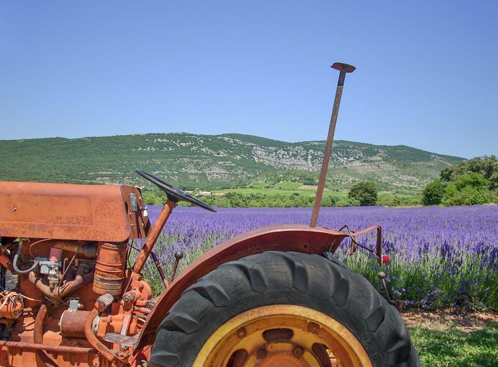 Free stock photo of CC0, farm, farming
