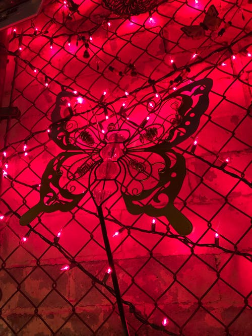 Free stock photo of butterfly, chain link fence, chain-link fence