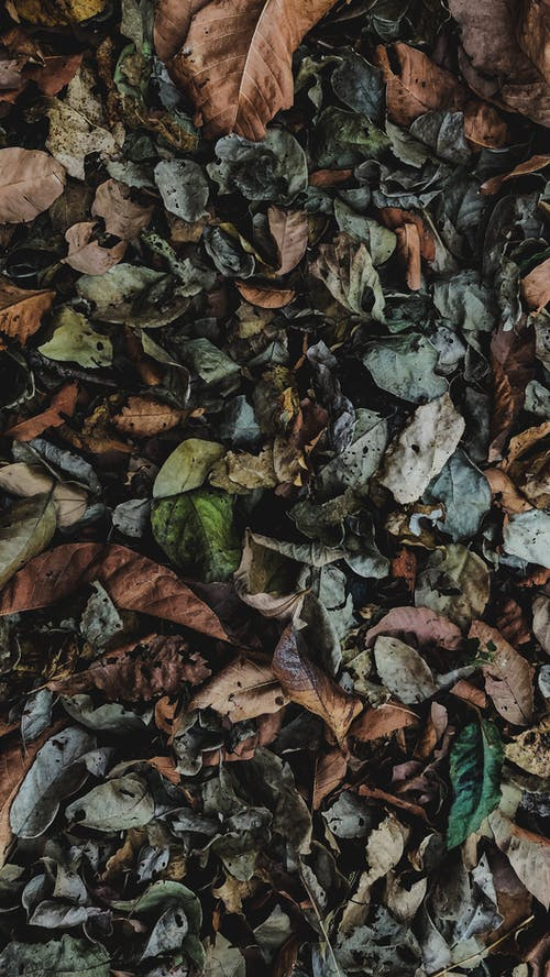 Free stock photo of 4k wallpaper, autumn leaf, banana leaf, Big leaf