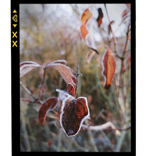 Kostenloses Stock Foto zu frost, kalt, pflanze