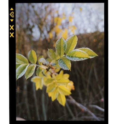 Kostenloses Stock Foto zu herbst, kalt, pflanze
