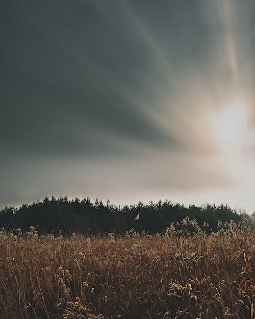 ağaçlar, alan, doğa, düzenle içeren Ücretsiz stok fotoğraf