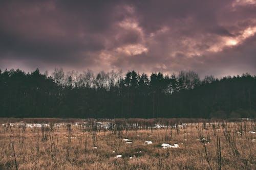 Imagine de stoc gratuită din aparat foto, câmp, cer, codru