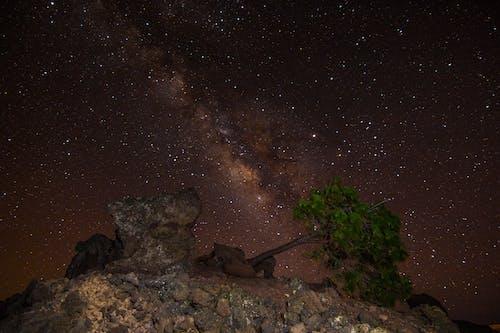 Fotos de stock gratuitas de astronomía, cielo estrellado, cielo nocturno