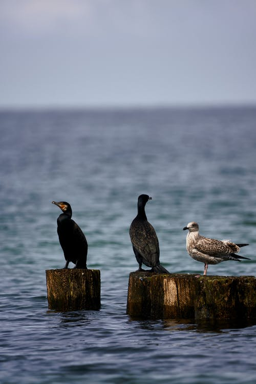 Seabirds sitting on wooden poles sticking out of water among sea rippling with