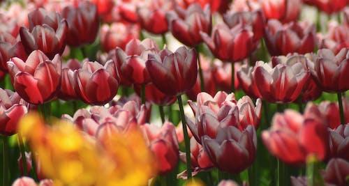 Ingyenes stockfotó botanikus, élénk, évszak, fényes témában