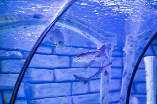 Requin à L'intérieur D'un Réservoir