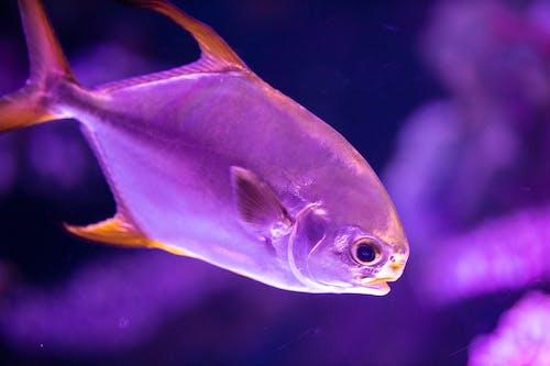 Foto profissional grátis de água, animais selvagens, animal, animal aquático