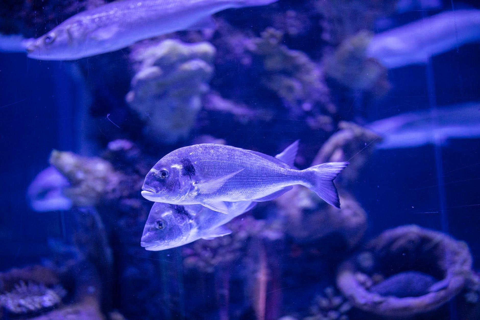 Aquarium Fish Food – You Need To Know The Basics!