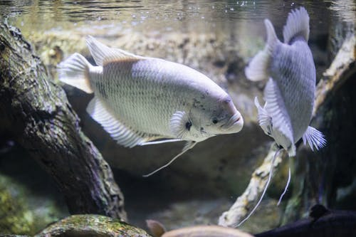 White Fish In Water