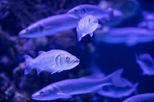 Fotos de stock gratuitas de acuario, agua, animal