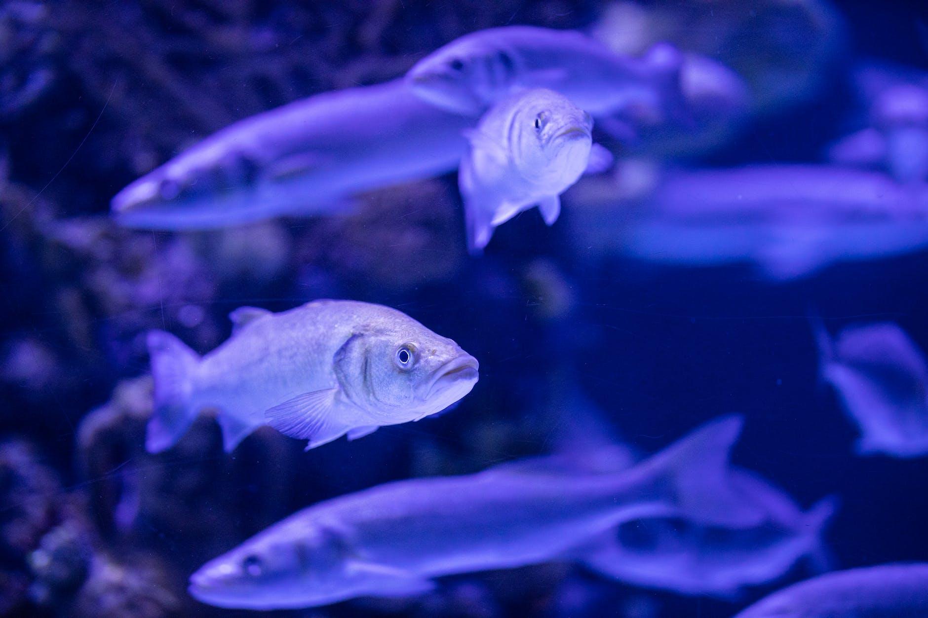 Aquarium Best Fishes For You