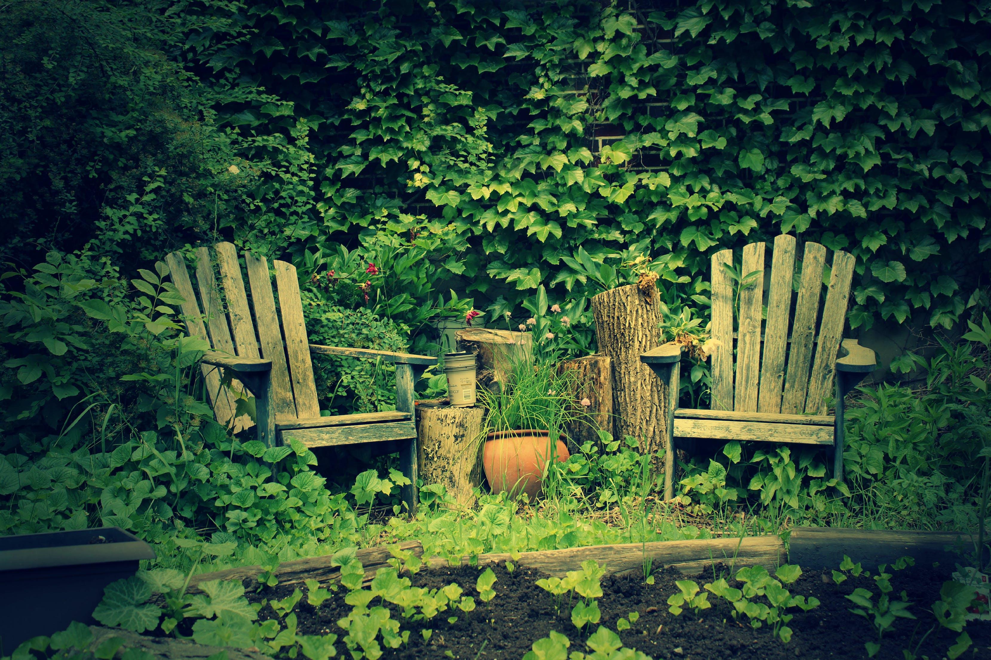 Free stock photo of eclectic, garden, muskoka chairs, niche