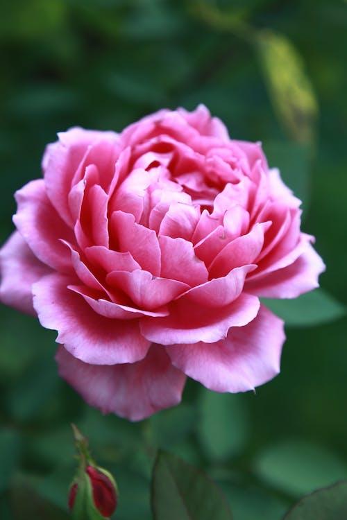 Foto profissional grátis de close, flor, flora