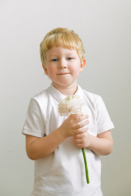 Gratis stockfoto met bloem, bloemen, blond, flora