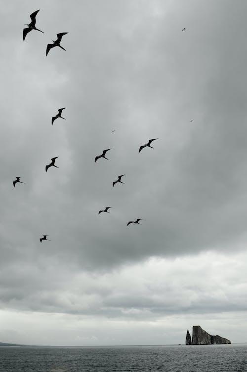 Foto d'estoc gratuïta de bandada, bandada d'ocells, blanc i negre, ennuvolat