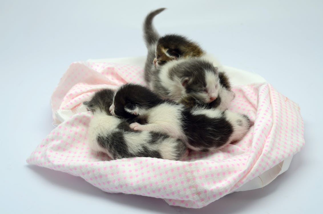 White and Black Kittens Lying on Pink and White Textile