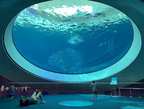 Leute, Die Ein Aquarium Besuchen