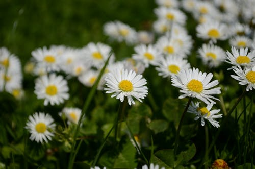 Free stock photo of beautiful flowers, summer flower