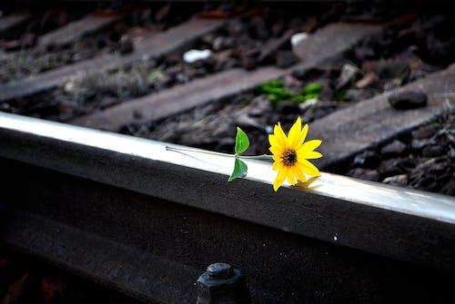 Foto profissional grátis de cor, cor seletiva, estrada de ferro, ferrovia