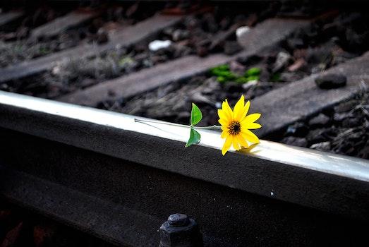 Free stock photo of light, nature, petals, leaf