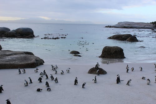 Penguins on White Sand Near Body of Water