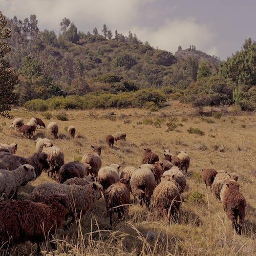 Free stock photo of animal, green mountains