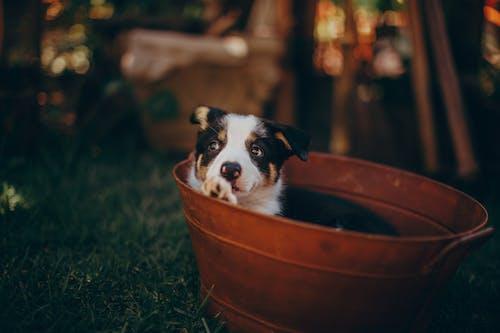 Photos gratuites de animal, animal de compagnie, animal domestique