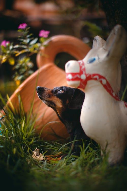 Ingyenes stockfotó állat, állatvilág, aranyos témában