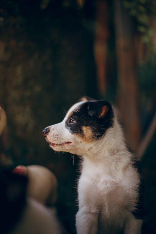 Foto profissional grátis de animal, animal de estimação, animal doméstico, bicho