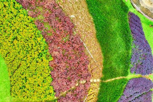 Green and Purple Flower Field