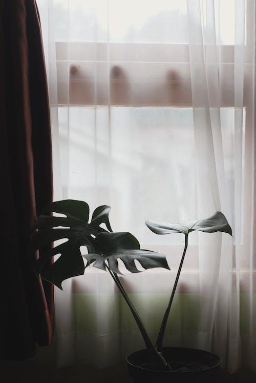 Foto profissional grátis de cômodo, costela-de-adão, folha de monstera, folhas