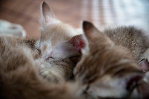 Free stock photo of cats, cute, kitten