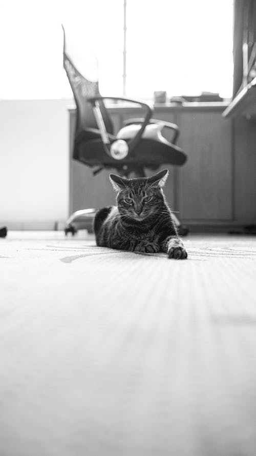 Monochrome Photo Of Cat Laying On Floor