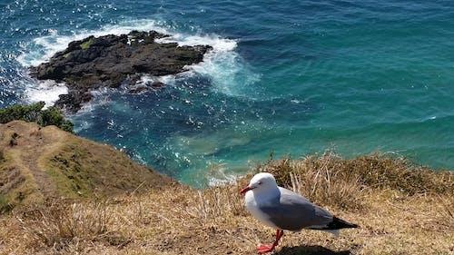 かもめ, ニュージーランド, 海洋, 青い水の無料の写真素材