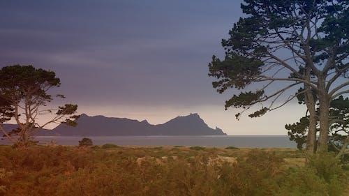 木, 海洋, 紫, 褐色の無料の写真素材
