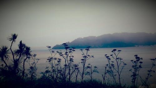 グレー, 侍, 木, 海洋の無料の写真素材