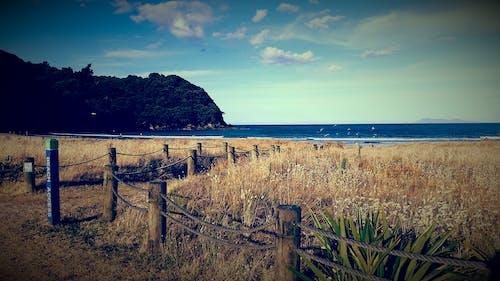 ニュージーランド, ビンテージ, ビーチ, 青の無料の写真素材