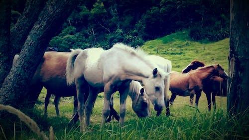 Foto profissional grátis de árvores, branco, castanho, cavalo branco