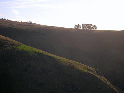 Foto profissional grátis de árvores, castanho, ecológico, Nova Zelândia