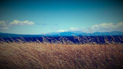Foto profissional grátis de amarelo, azul, céu azul, mar aberto