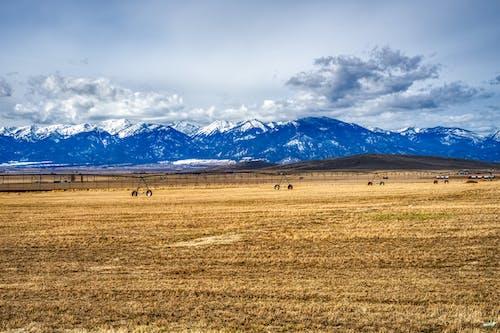 山, 山峰, 山脈, 景觀 的 免费素材照片