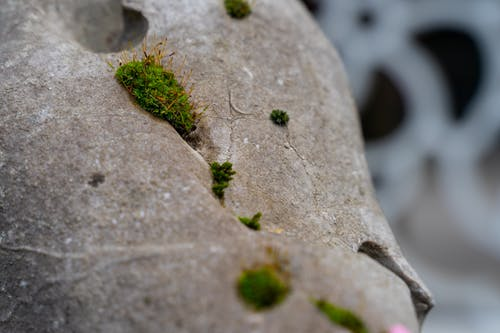 Free stock photo of macro, moss, stone