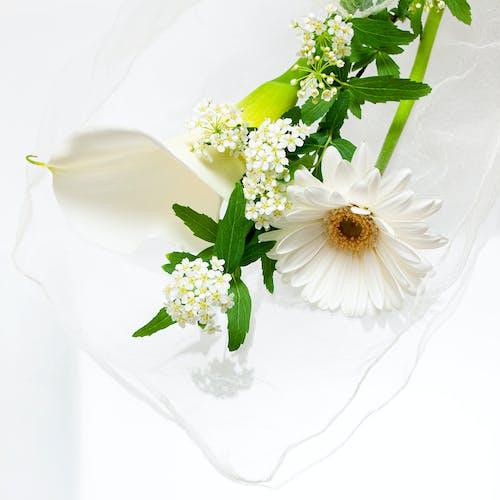 Fotobanka sbezplatnými fotkami na tému flóra, kvet ovocného stromu, kvety