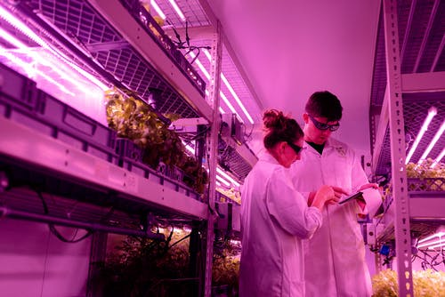 Scientists in Indoor Farm