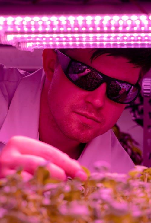 Kostnadsfri bild av forskare, forskning, gröda