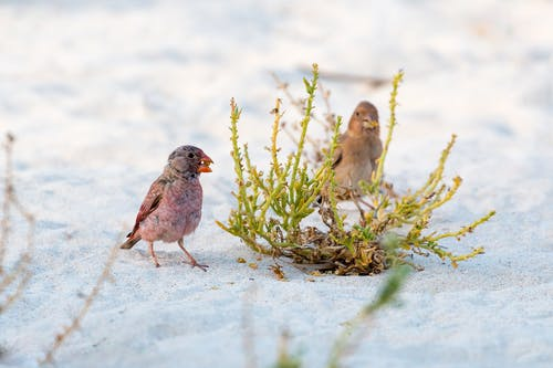 Two Birds On Gray Sand