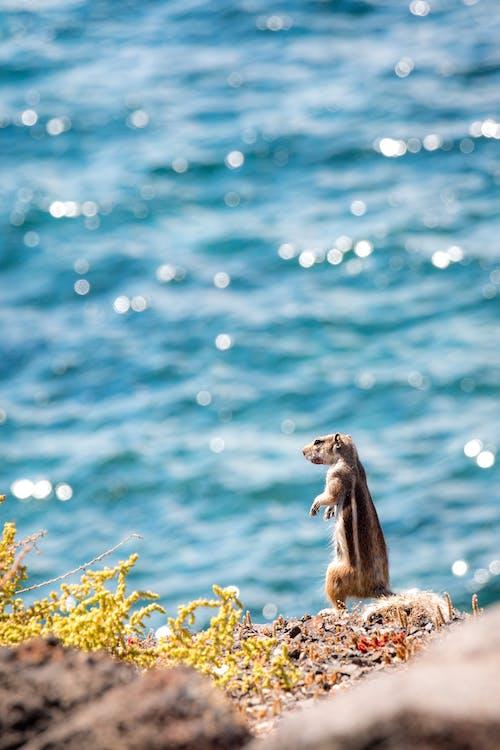 Squirrel Near Body Of Water