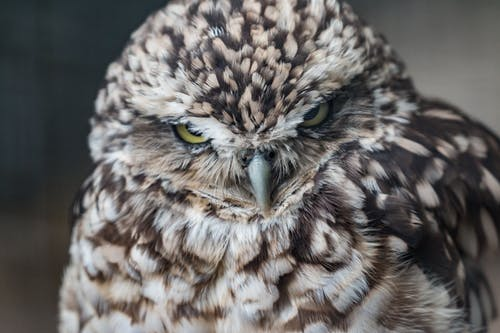 Owl In Close Up Photography